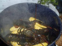 Lobsters and corn in the pot