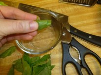 Cutting Rolled Basil