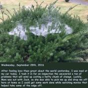 wednesday-september-28th-2016