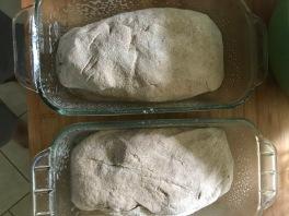 homemade wheat bread 3