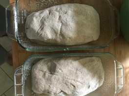 homemade wheat bread 3