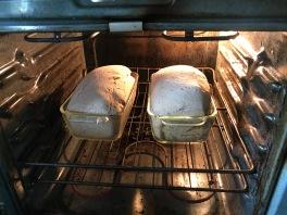 homemade wheat bread 4
